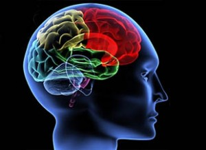 Brain-Inflammation-Linked-To-Schizophrenia-Study